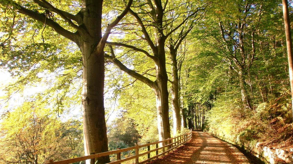 equinoccio de otoño,otoño,días más cortos,sol,depresión otoñal,