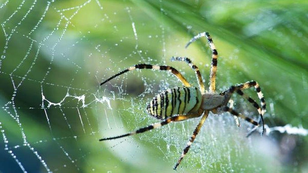 ¿Cómo nadan las arañas?