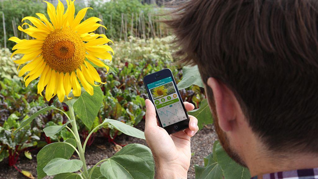 Un jardinero virtual