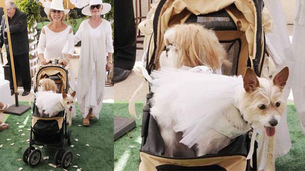 La ceremonia canina