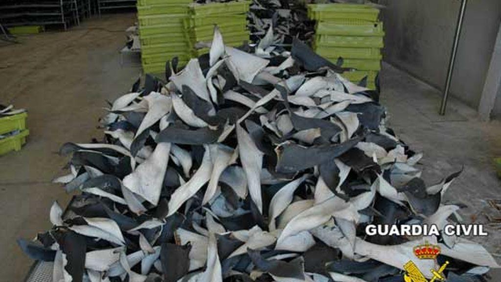 En el Día del Medio Ambiente la ONG Oceana denuncia la caza indiscriminada de tiburones
