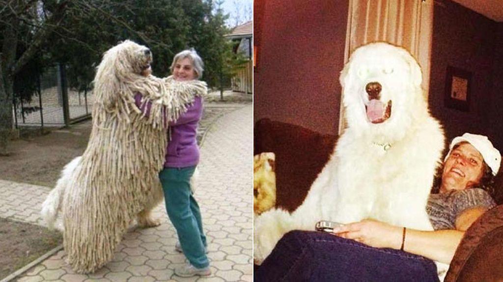 Los perros XXL más famosos de Internet