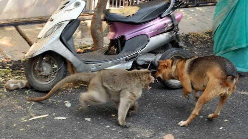 Protegiendo a su cría