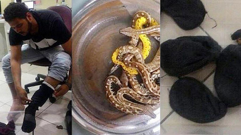 Detenido un hombre en Indonesia por intentar volar con 10 serpientes debajo del pantalón