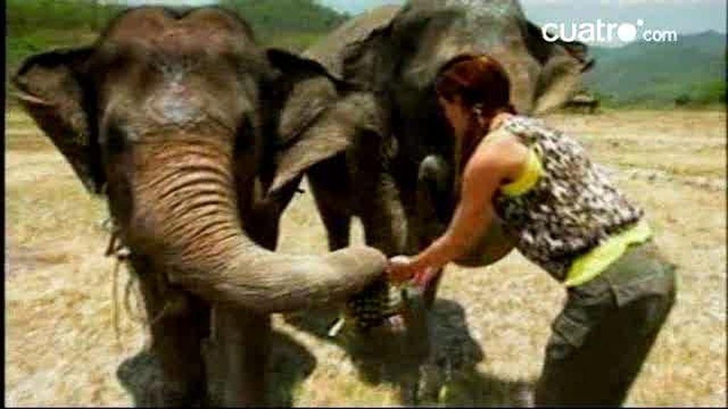 IMÁGENES INÉDITAS. Paseo en elefante
