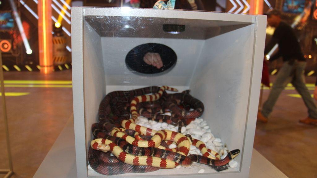 Serpientes de 'Killer karaoke'