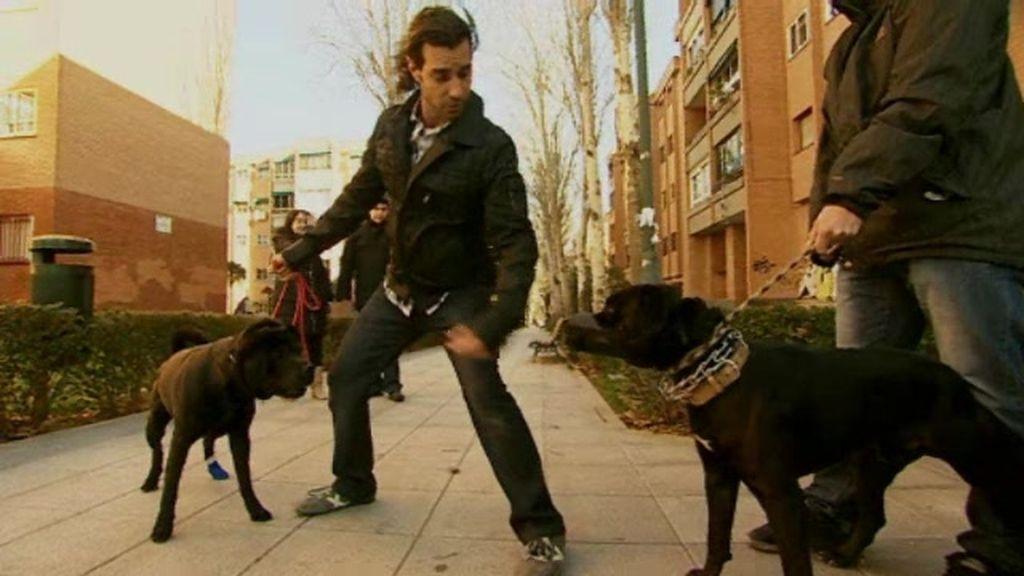 Promo Malas Pulgas: ¿Te gustan los perros?