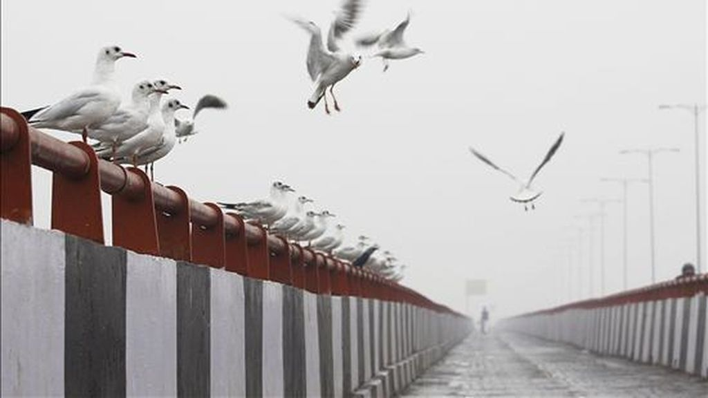 Varios pájaros descansan sobre un puente. EFE/Archivo