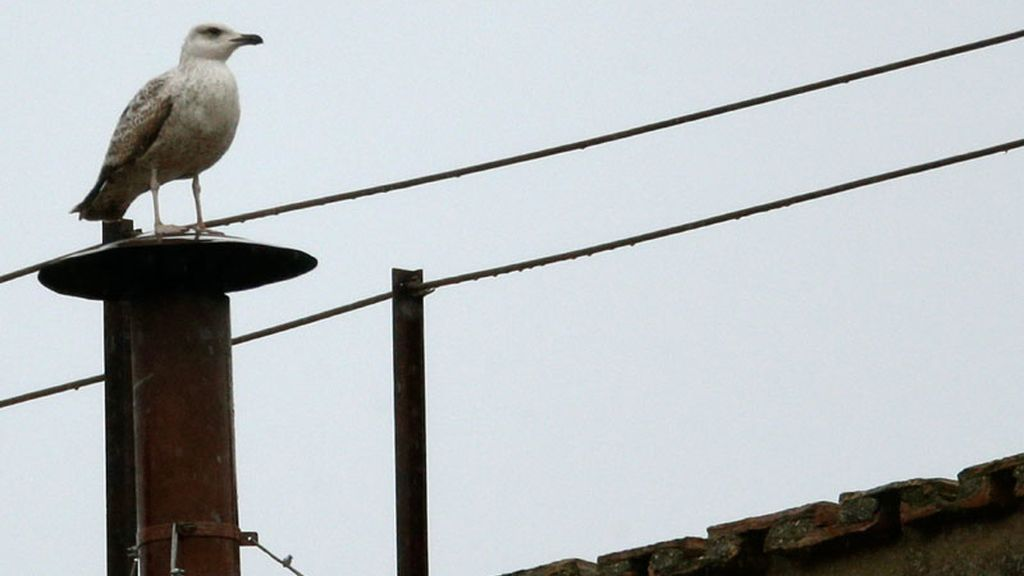 Una gaviota sobre la chimenea