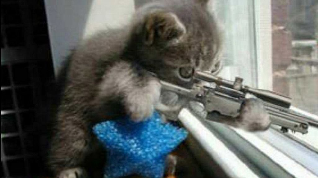 #BrusselsLockDown, gatos para despistar a los terroristas