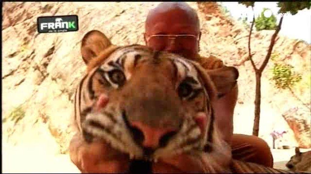 AVANCE: Los secretos de los tigres