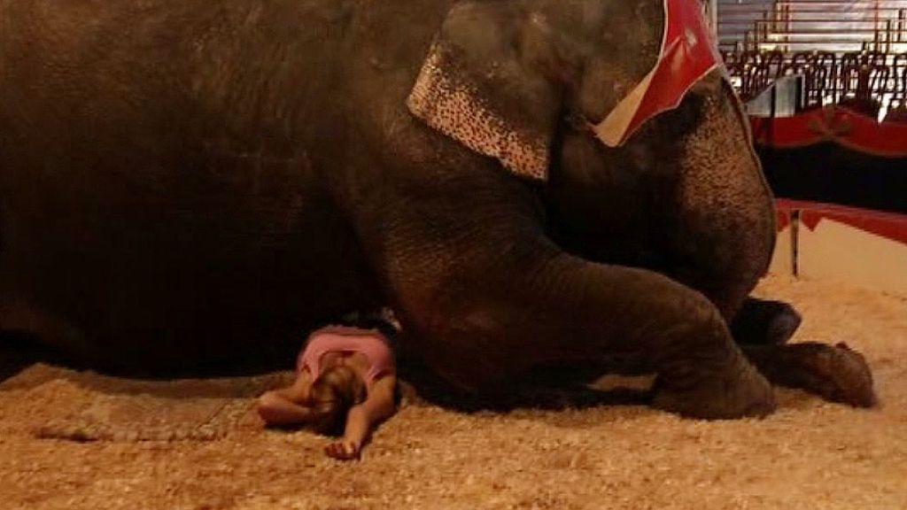 Marina se tumba bajo un elefante