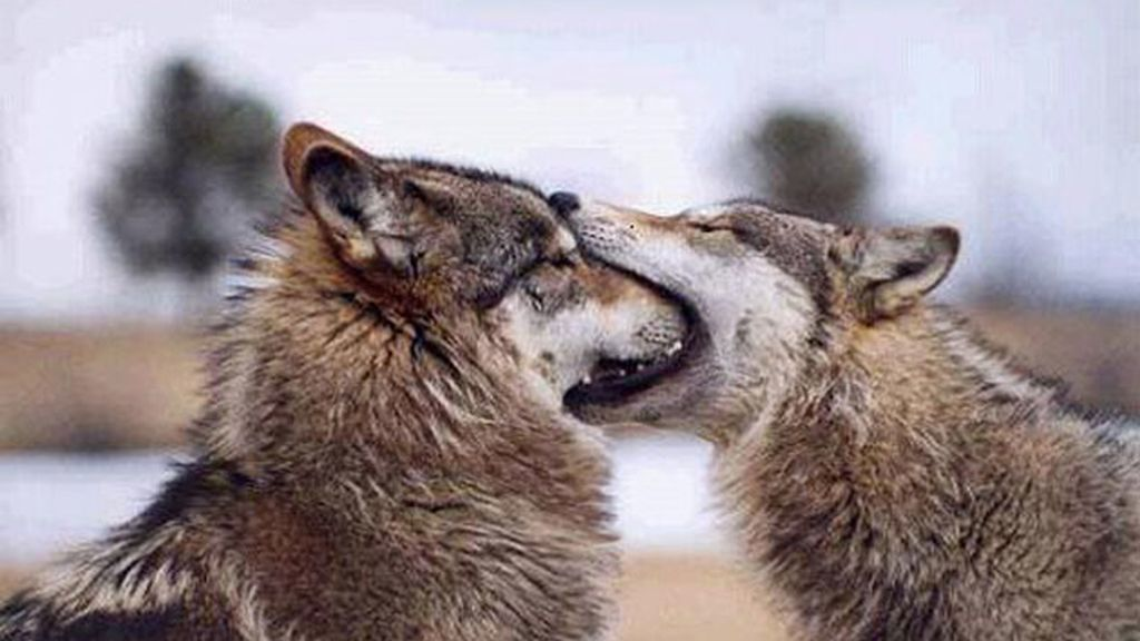 Los besos más tiernos de animales
