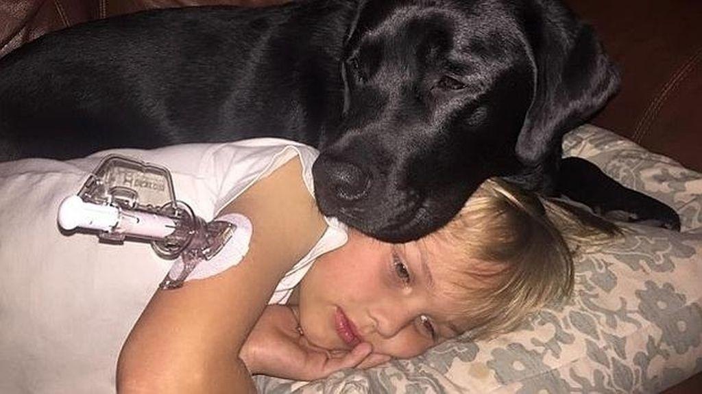 Un perro detector de diabetes le salva la vida a un niño de 7 años