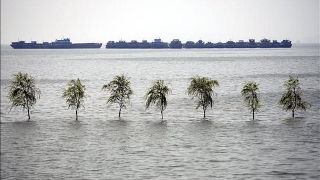 Unos árboles quedan sumergidos en varios metros de agua en el lago Pyang, en Xingzi (China). EFE
