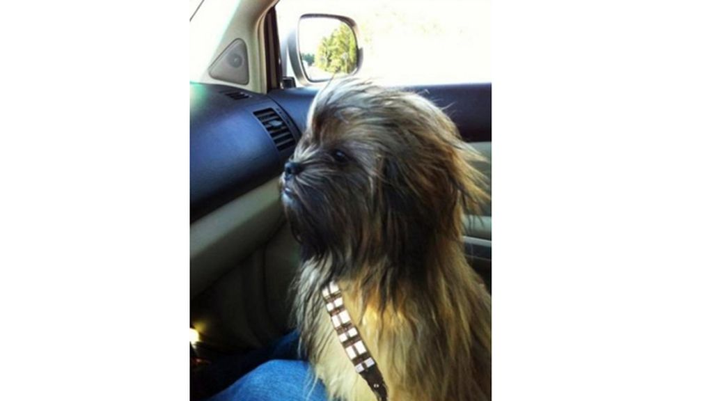 ¡Chewbacca existe!