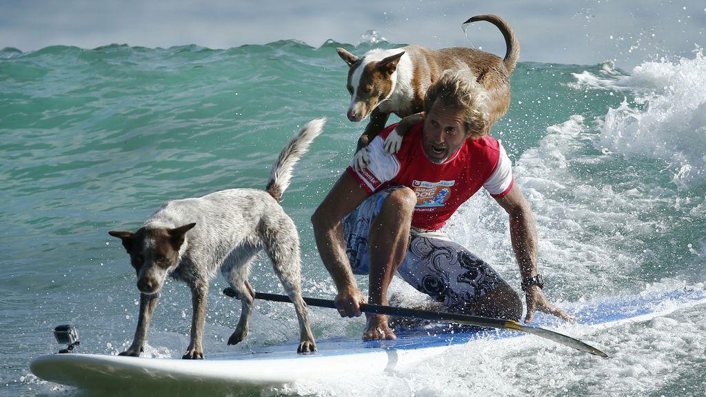 Chris de Aboitiz combina sus dos amores, el surf y los perros (20/02/2016)