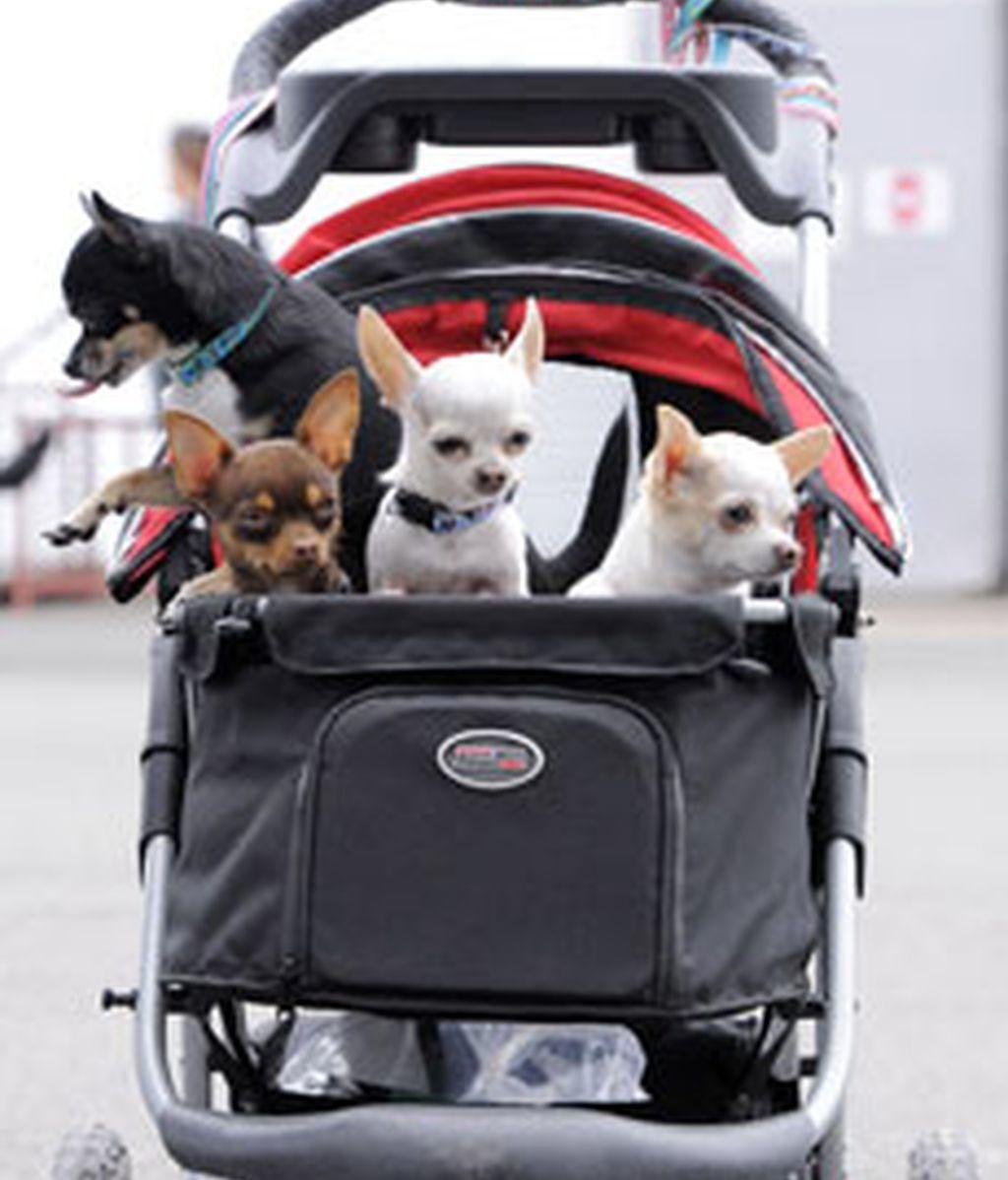 Los perros muestran sus mejores habilidades