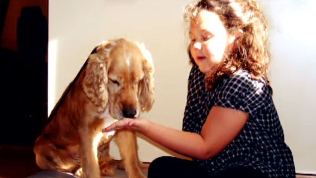 El programa ha conseguido que muchos perros tengan hoy un hogar