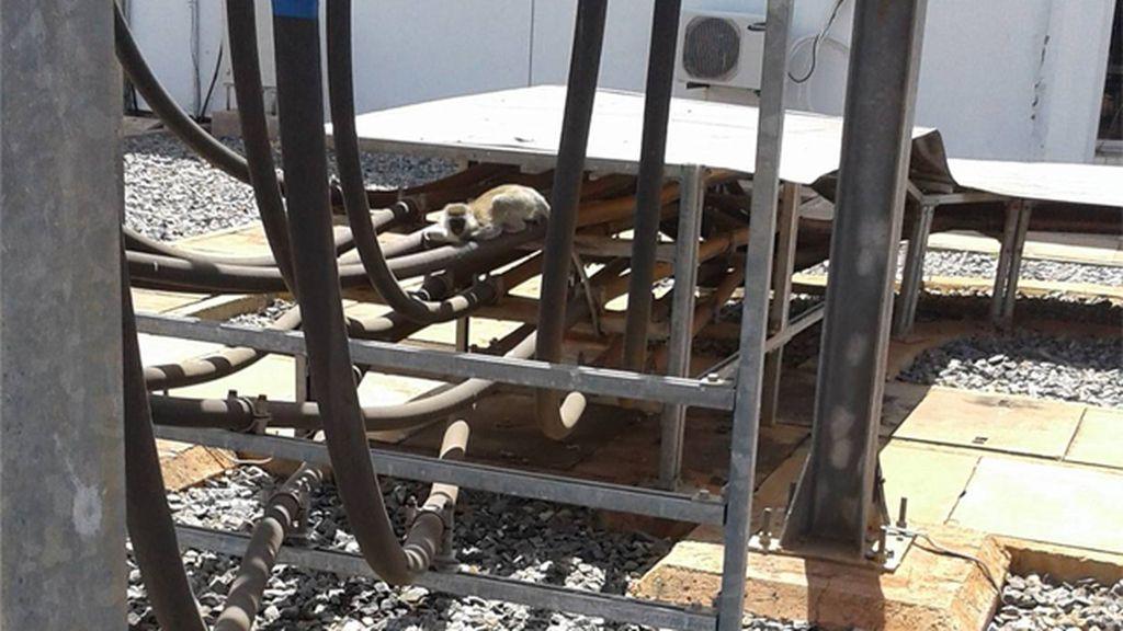 Un mono causó el apagón que dejó sin luz a toda Kenia durante tres horas
