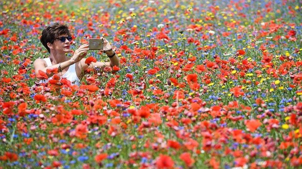 Floración de Castellucio de Norcia