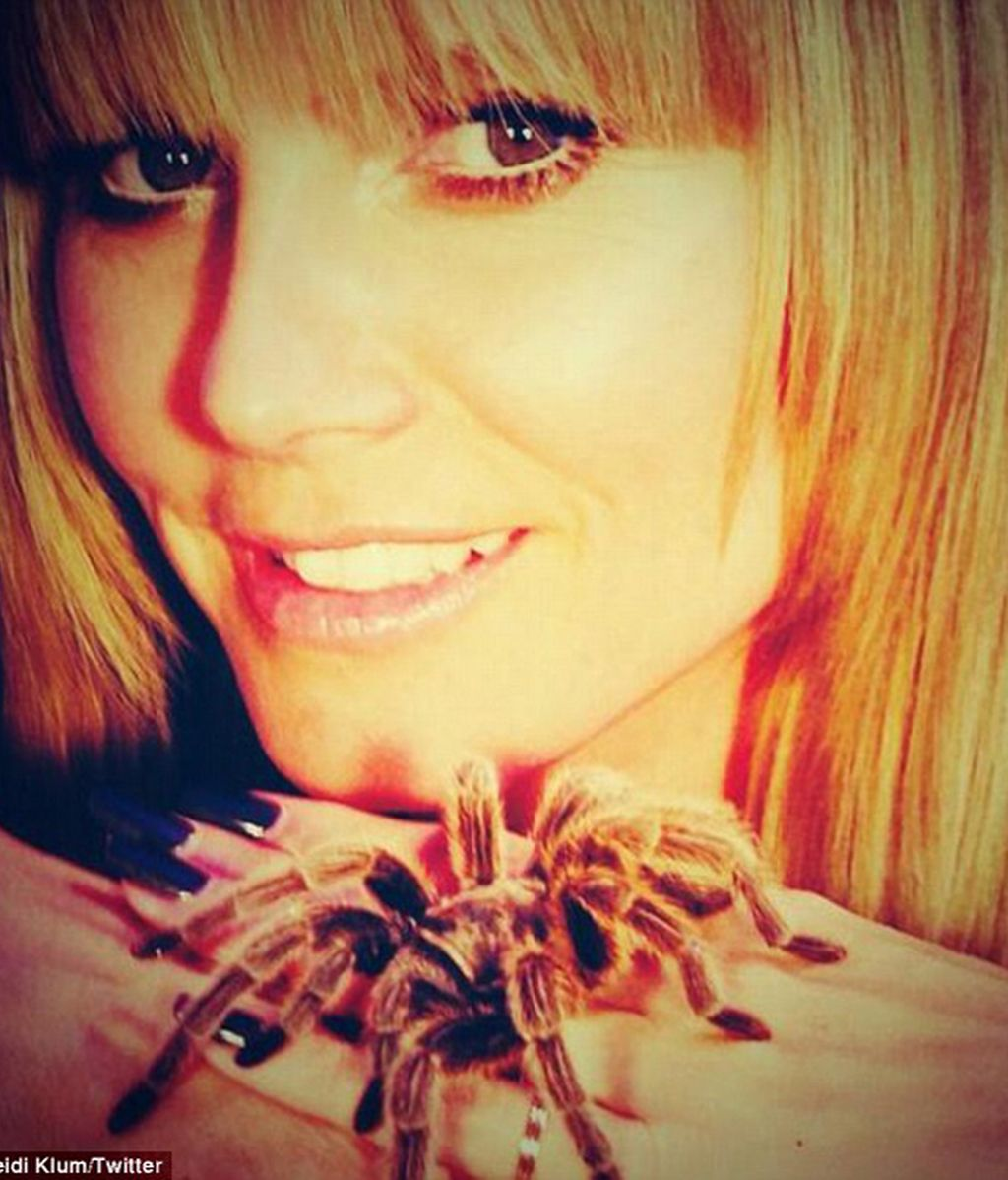 A Heidi Klum no le asustan las arañas