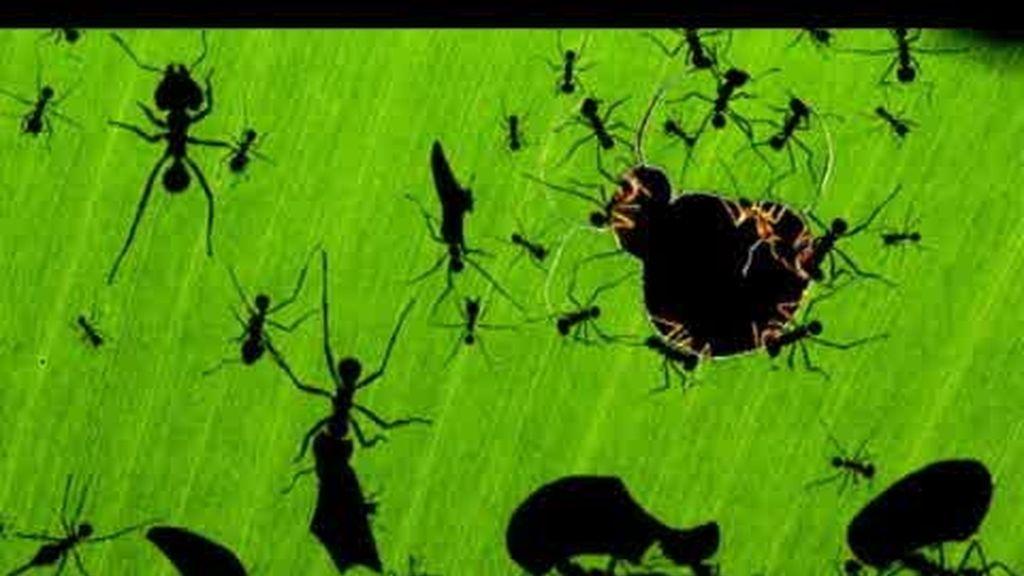 'Una maravilla de hormigas'