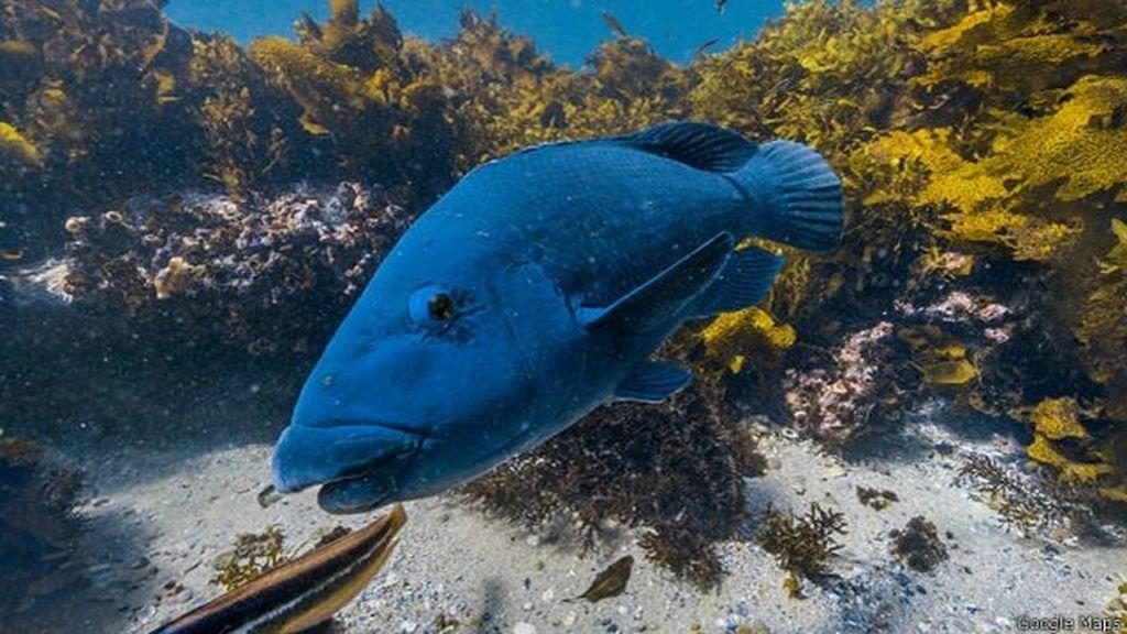 Primer mapeo tridimensional: la Gran Barrera de Coral, Australia