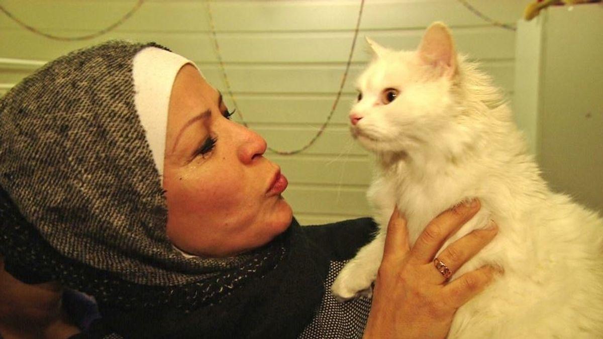 Gato se reencuentra con su familia refugiada