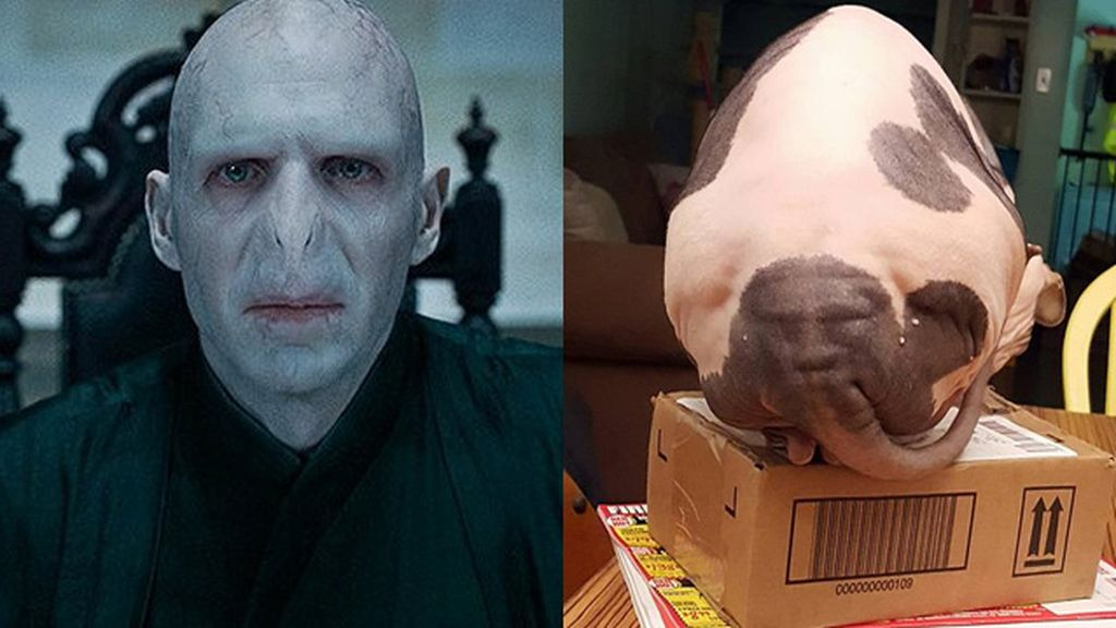¿Voldemort o culo de gato?