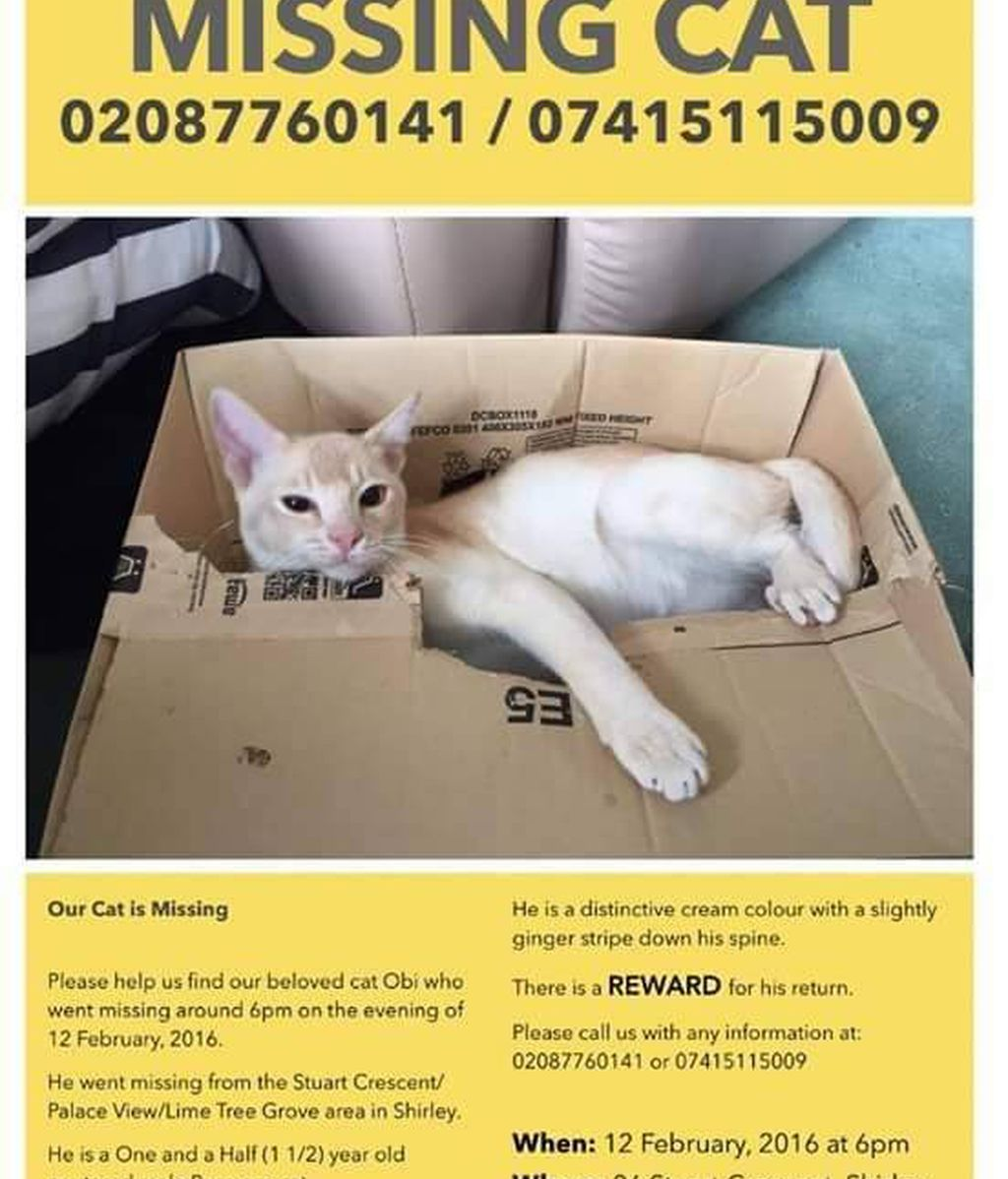 Cartel de un gato desaparecido en Londres