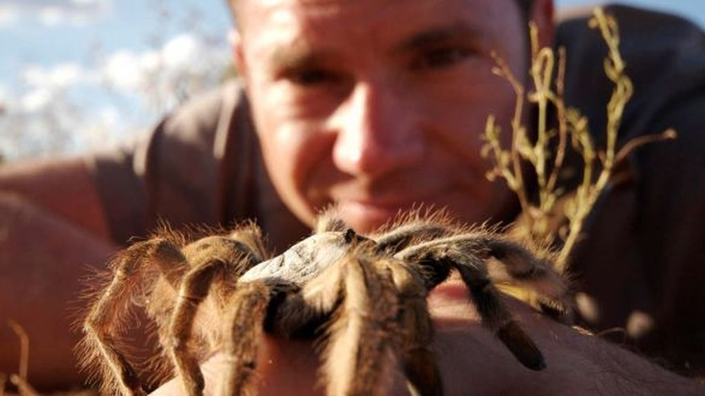 'Fauna letal', en Energy