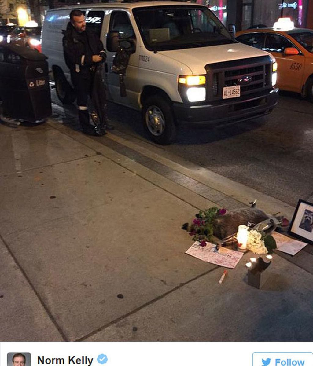 Toronto se vuelva con un animal muerto