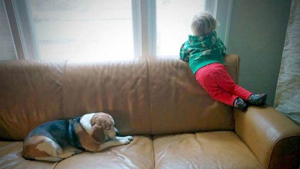 amistad perro niño,mascota de niño,Moe,Luke y Moe,