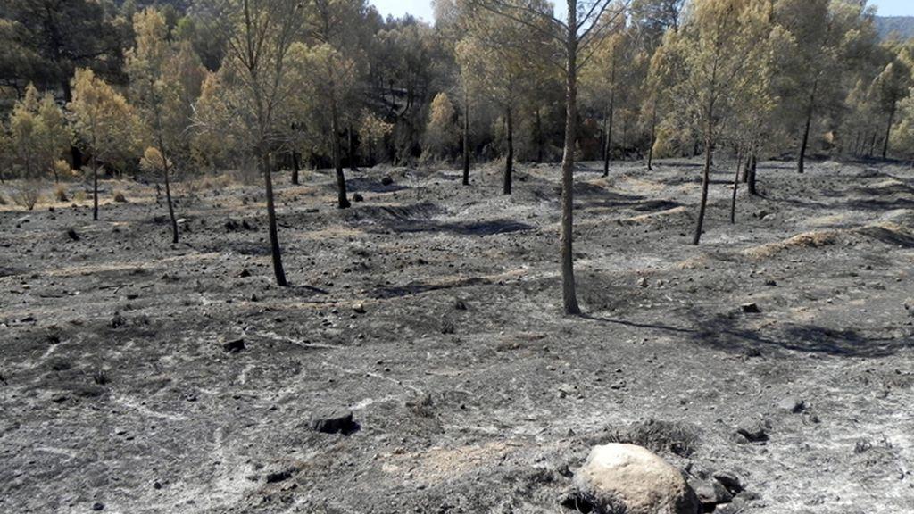 La Junta de Castilla La Mancha da por extinguido el incendio de Hellín