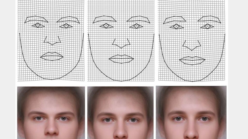 cara, inteligencia, forma de la cara, rostro