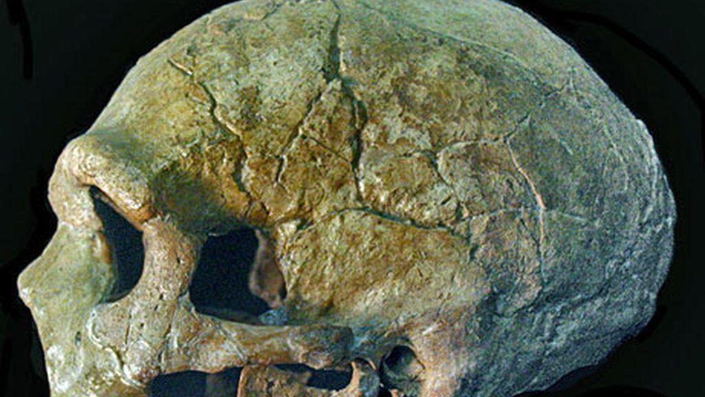 Investigadores resuelven el enigma sobre la extinción de los neandertales