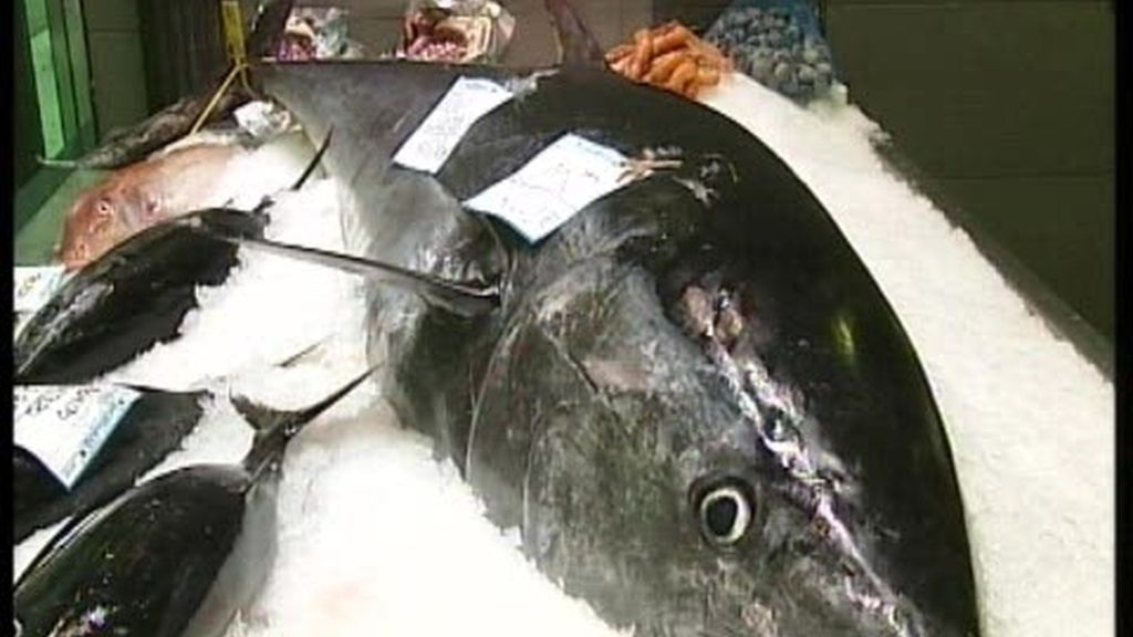 ¡Un atún de 105 kilos!