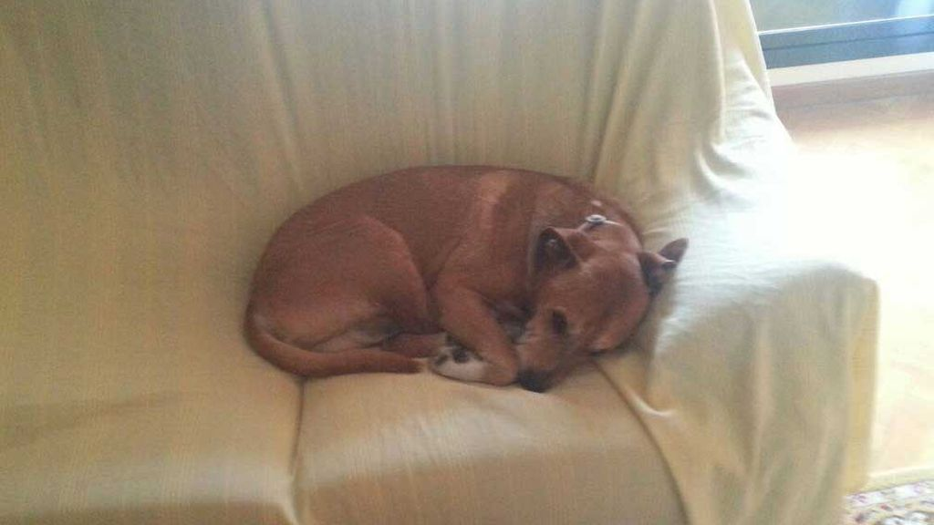 La comunidad de Madrid quiere sacrificar al perro de Teresa