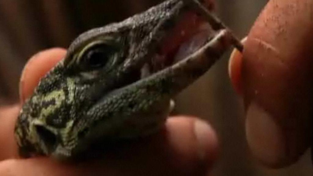 Un bebe dragón