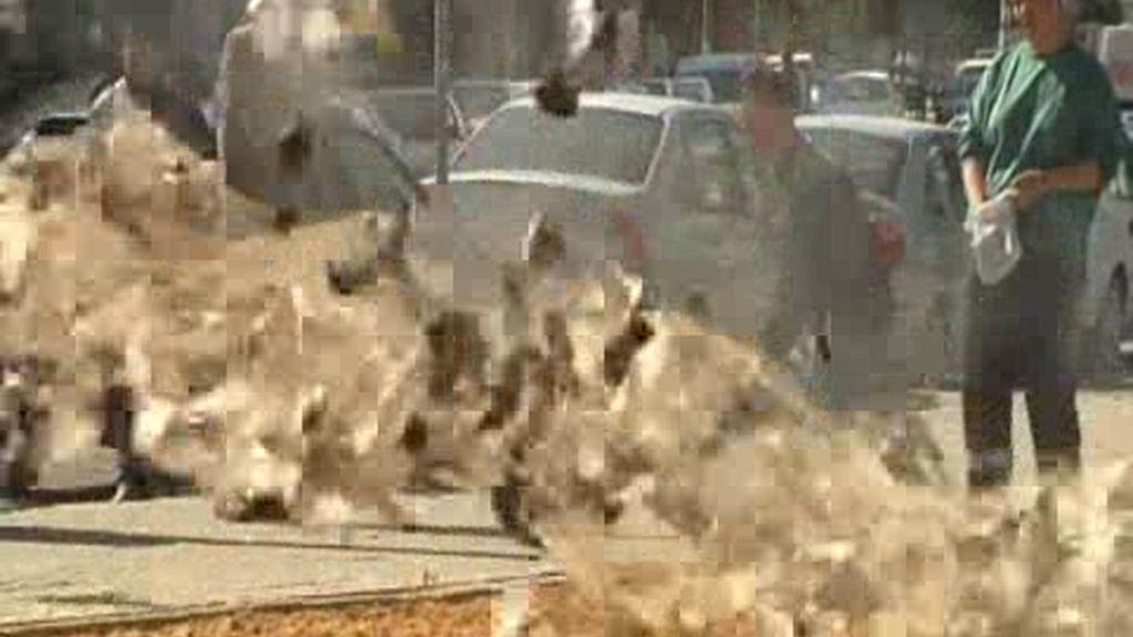 Invasión de palomas en Sevilla