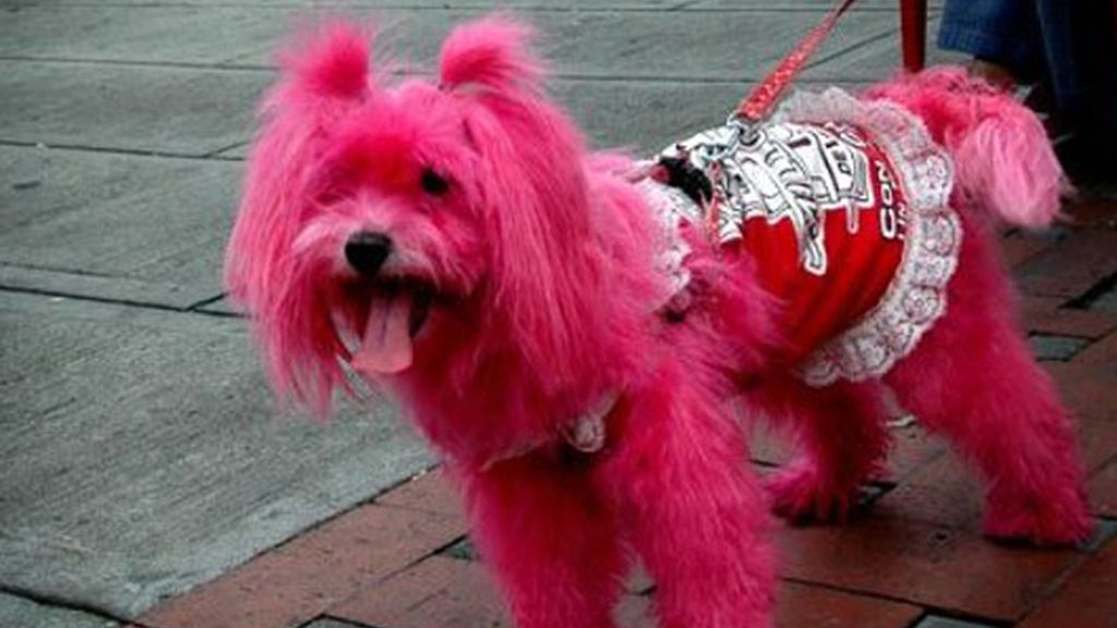 Dogpink