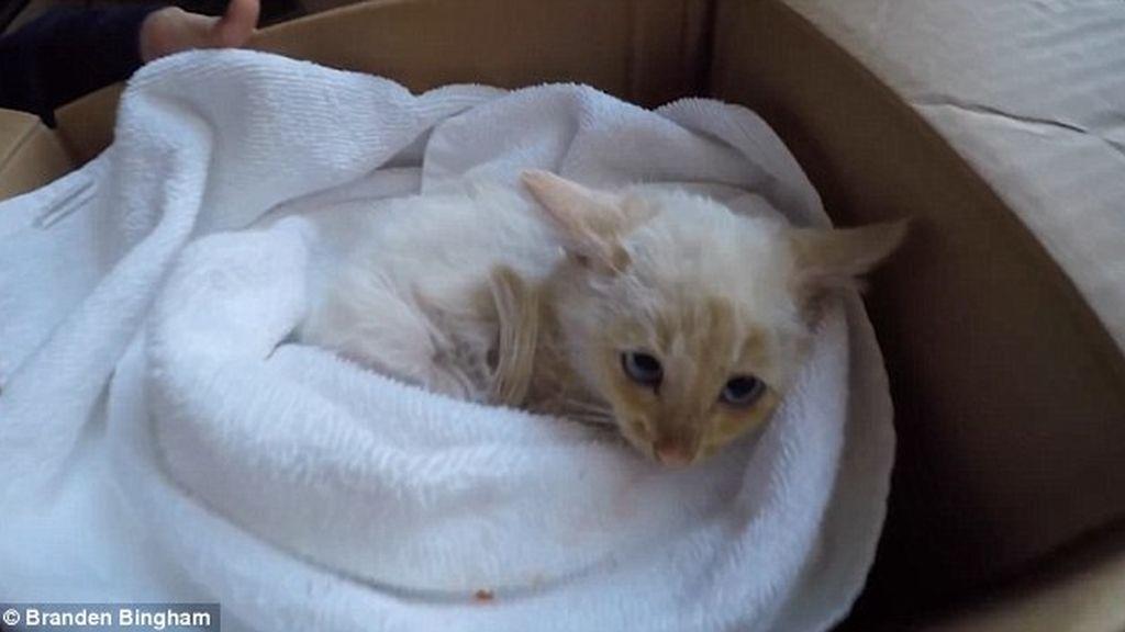 Resucitan a un gato que encontraron congelado en la nieve