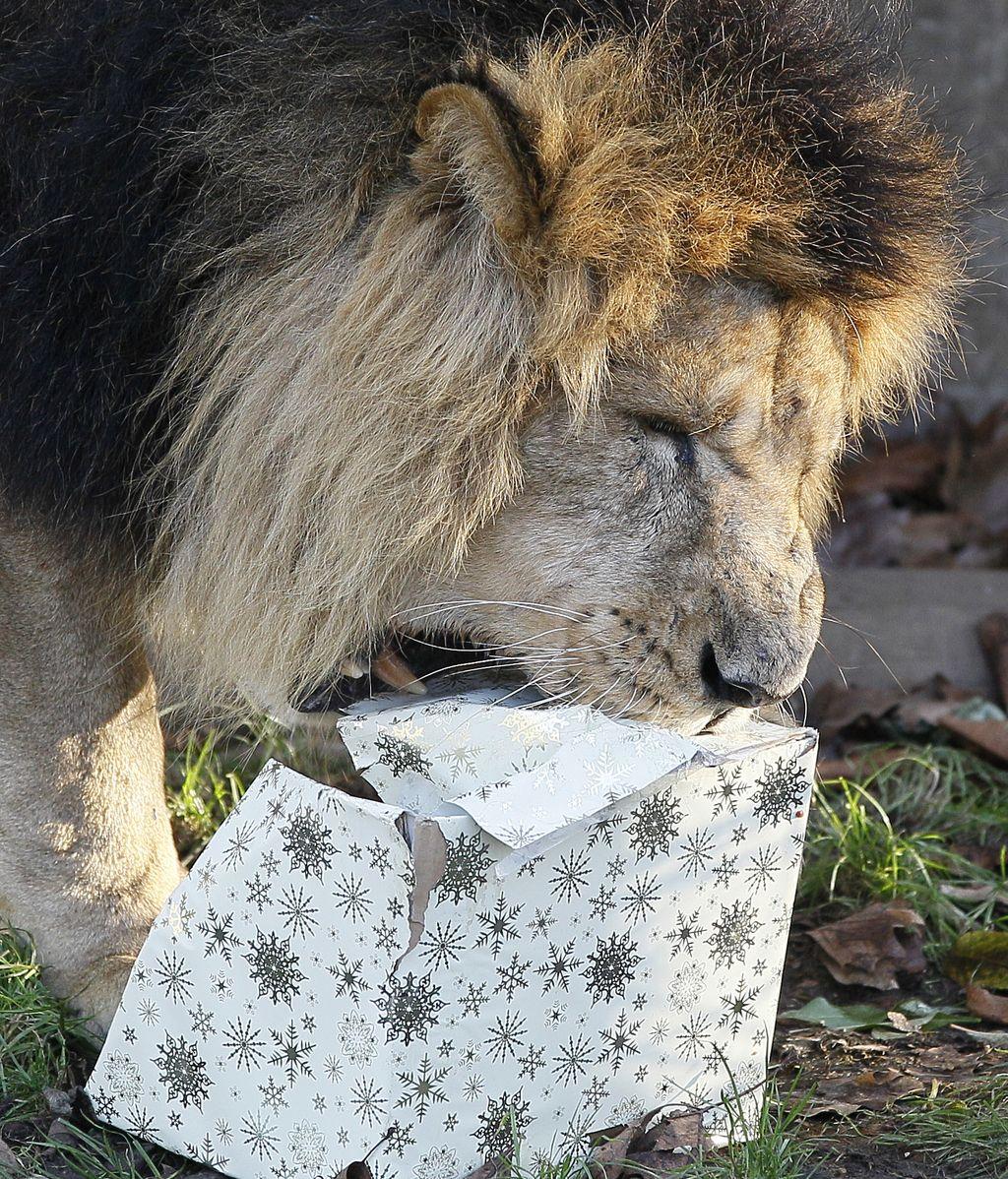 Animales con regalos