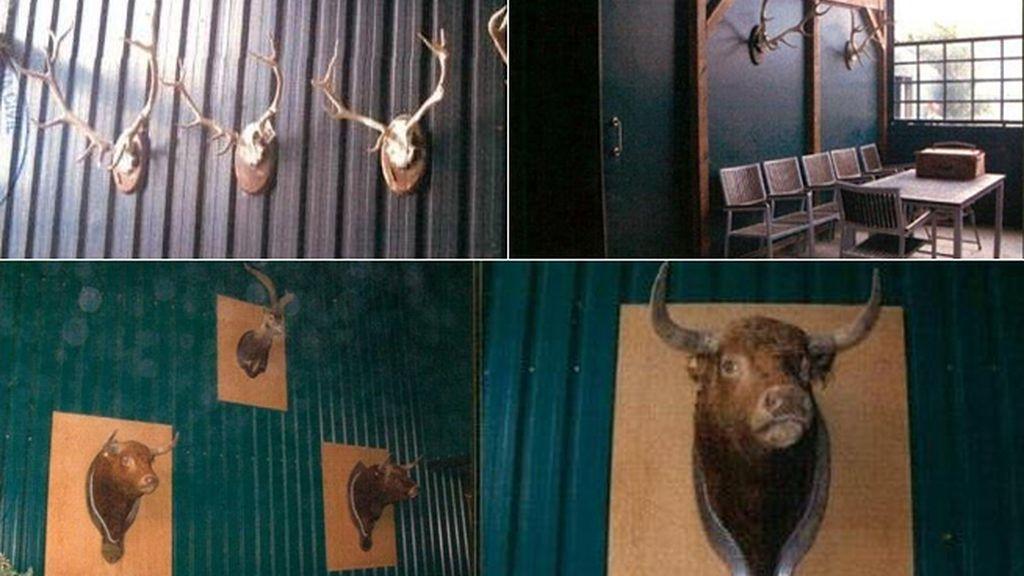 """""""Putitas de confianza"""", picaderos, cabezas de toro y joyas: los placeres ocultos de la Púnica"""