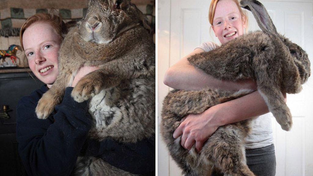 Ralph, el conejo gigante. Foto: Youtube