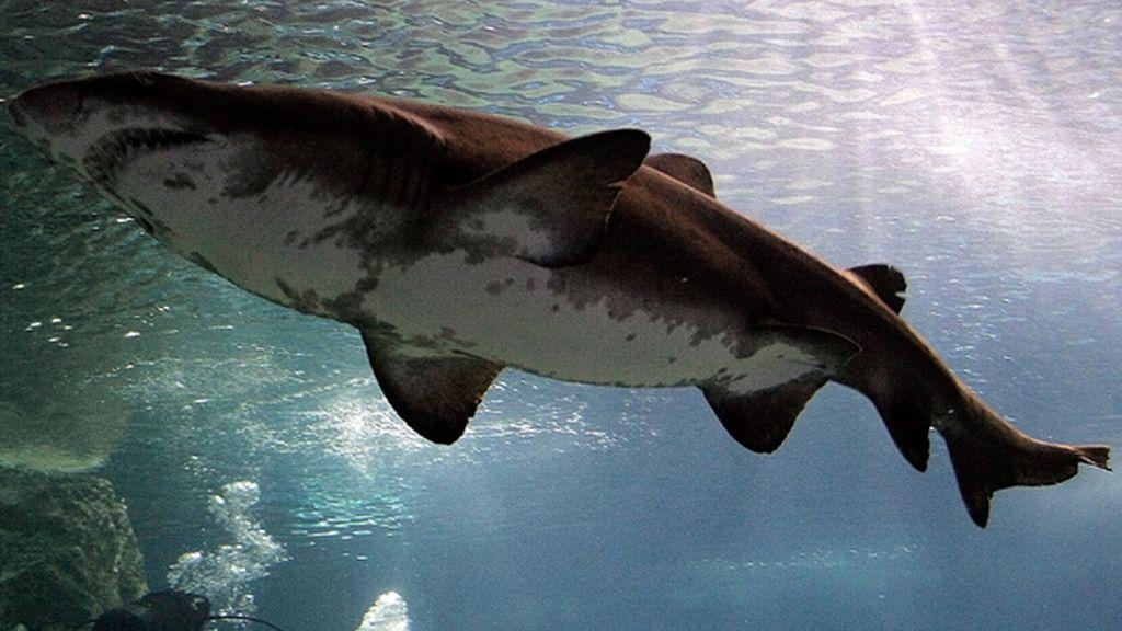 Un surfero vive en directo la repetición del ataque de tiburón de Mick Fanning