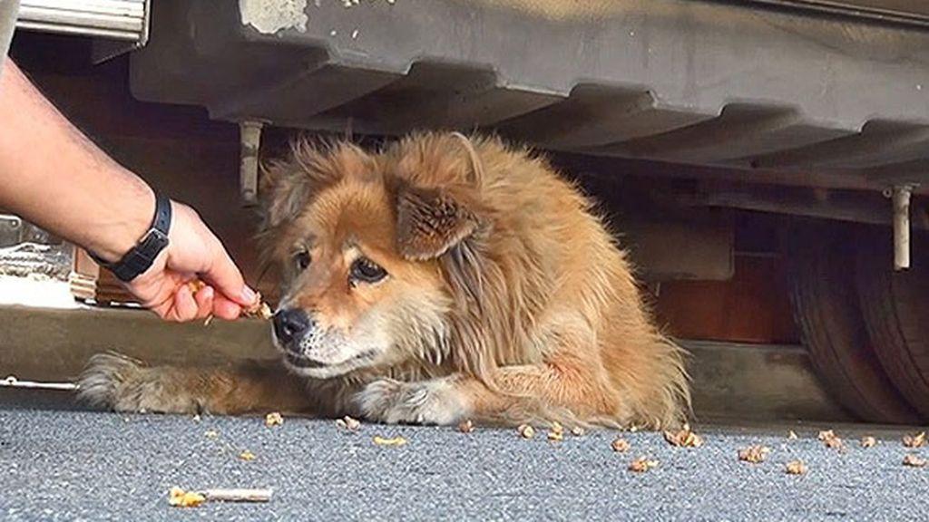 Una perrita abandonada, rescatada gracias a Google Street View