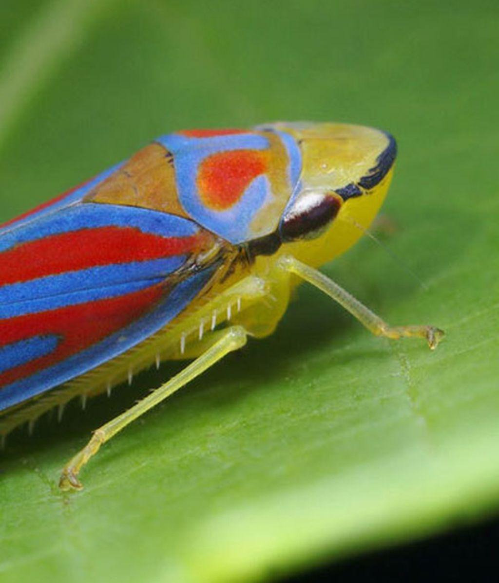 Fobias a bichos