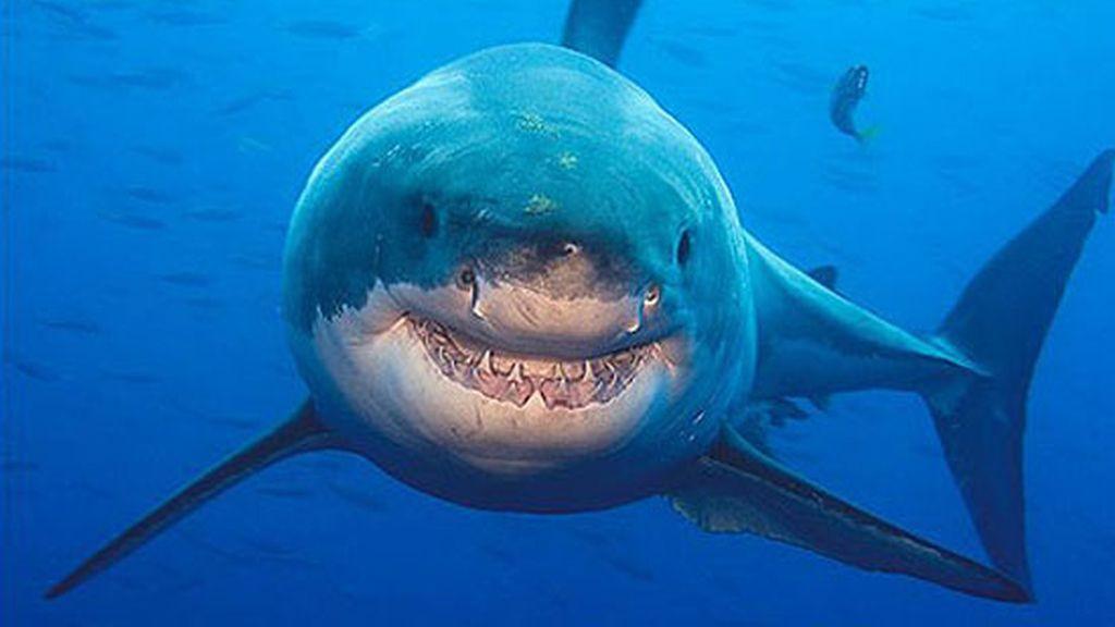 La curiosa sonrisa de un tiburón en aguas mexicanas